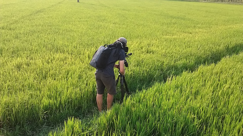 filming at a rice field An Giang, Vietnam